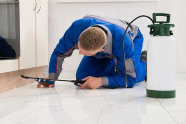 Pest control Services and Extermination