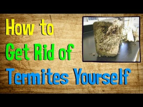 Create Your Own DIY Termite Treatment