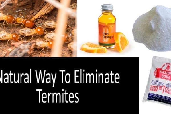 Natural Way To Eliminate Termites