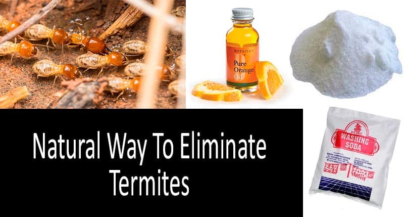 What is The Best Natural Termite Control?