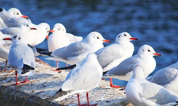 Bird Control companies