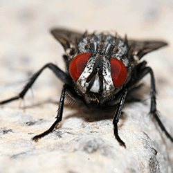 house-fly-in-Kelowna-bc