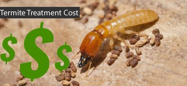 how-much-does-it-cost for termite removal