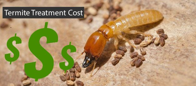 Reduce Your Cost of Termite Treatment