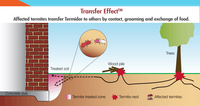killing-termites-Transfer-Effect-