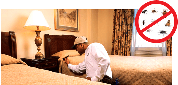 hotel-pest-inspections
