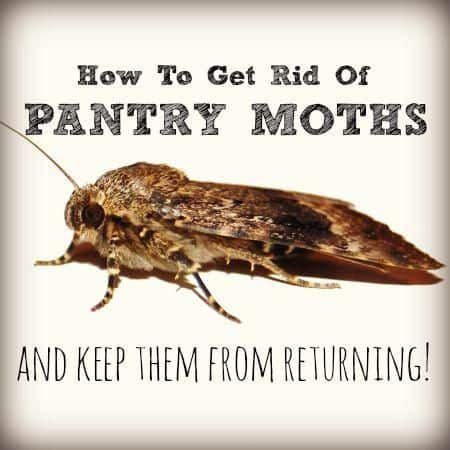 How to Get Rid of Pantry Moth Infestation Safely