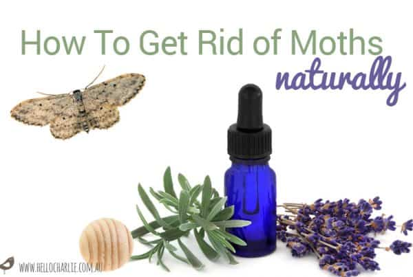 how-to-get-rid-of-moths-naturally