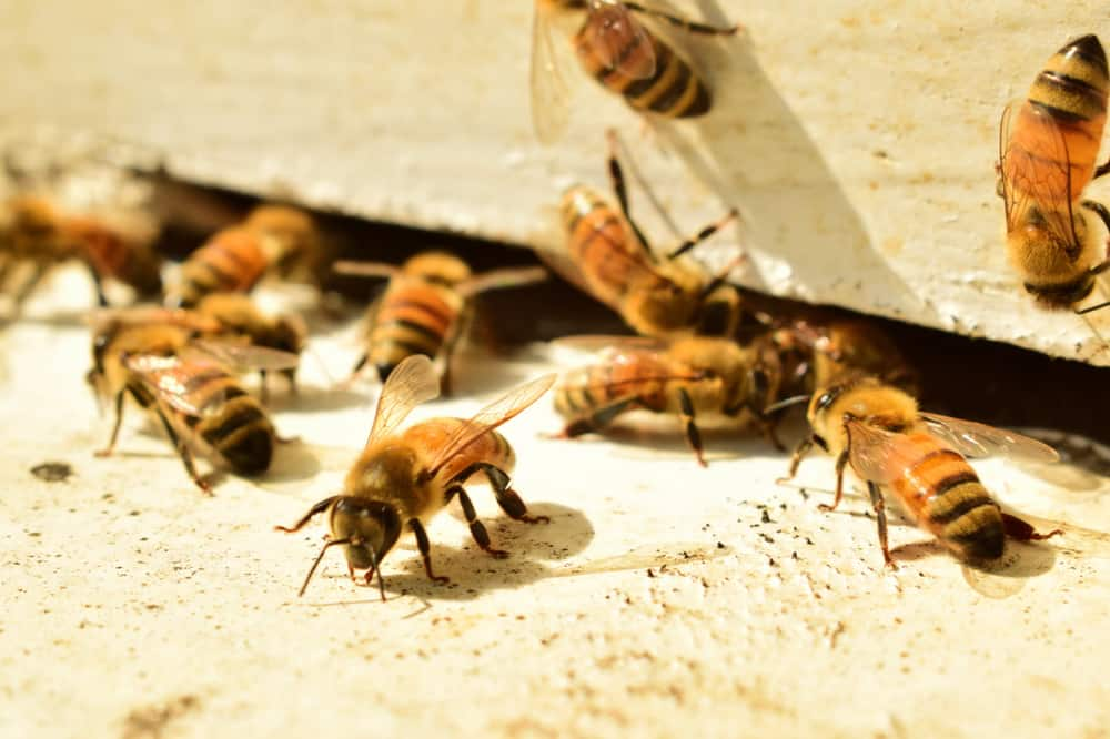 Ways To Get Rid Of Your Friendly Neighborhood Bees