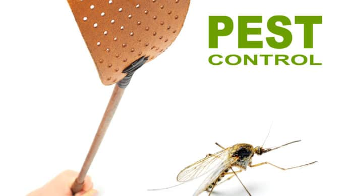 Four Simple Ways to Avoid Pests at Home