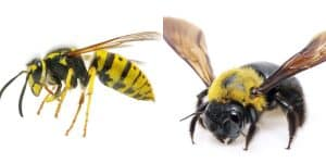 types-of-bees