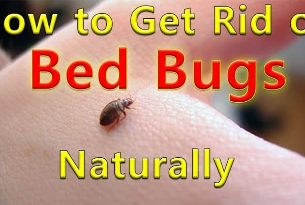 bed bug removal Apache Junction