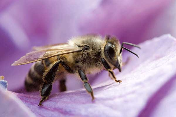 Home remedies for killing bees quickly