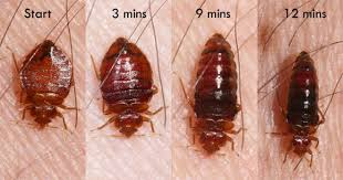 Why Should You Use Diatomaceous Earth Bed Bugs Control Treatment?