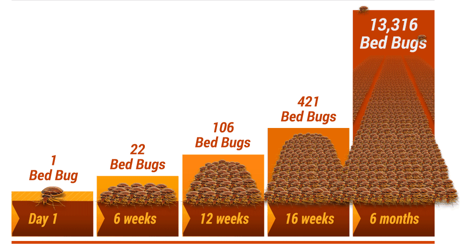 Bed-bug-infestation-chart