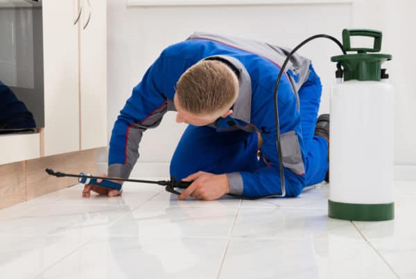 Gilbert pest control services