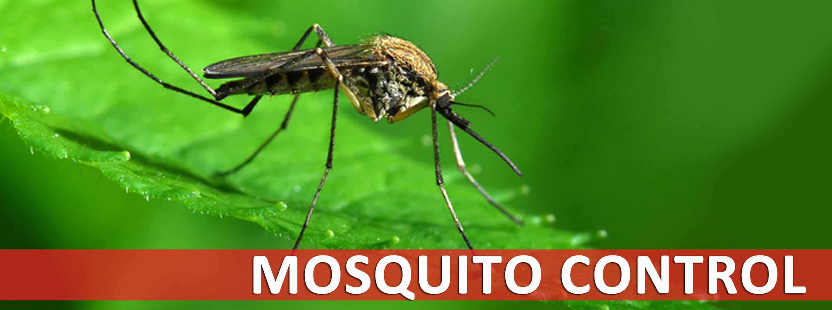 Natural Mosquito Spray For Your Yard Reviews