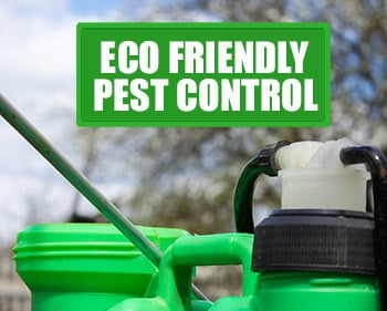 Some Benefits of Eco Friendly Pest Control