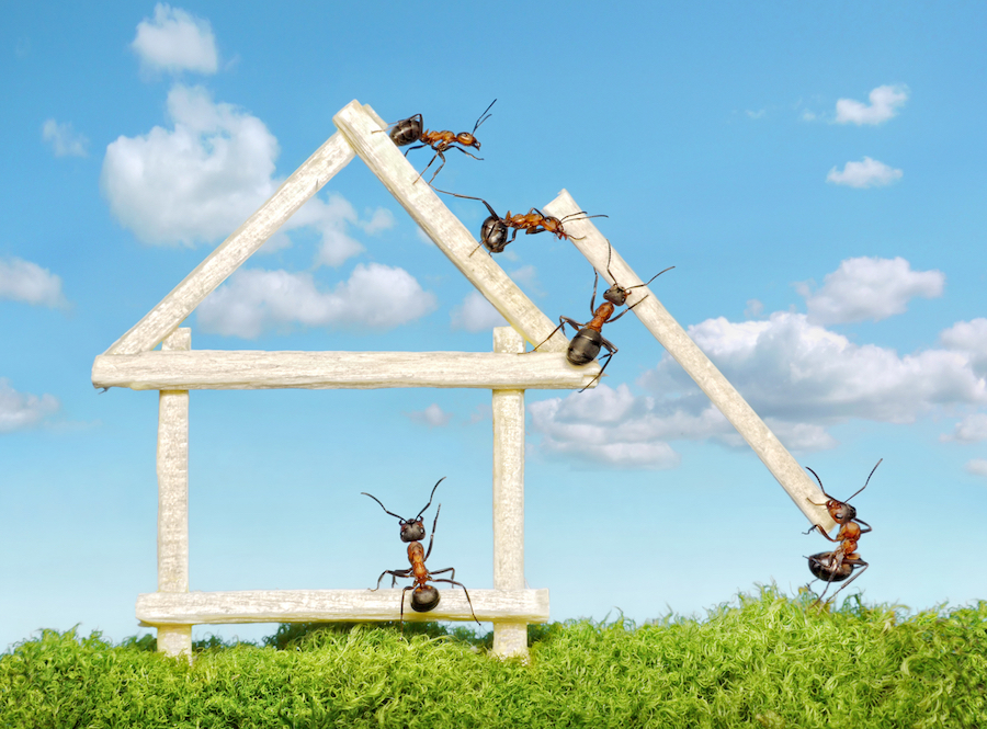 Why Empty Unsold Houses Are Being Overrun By Pests