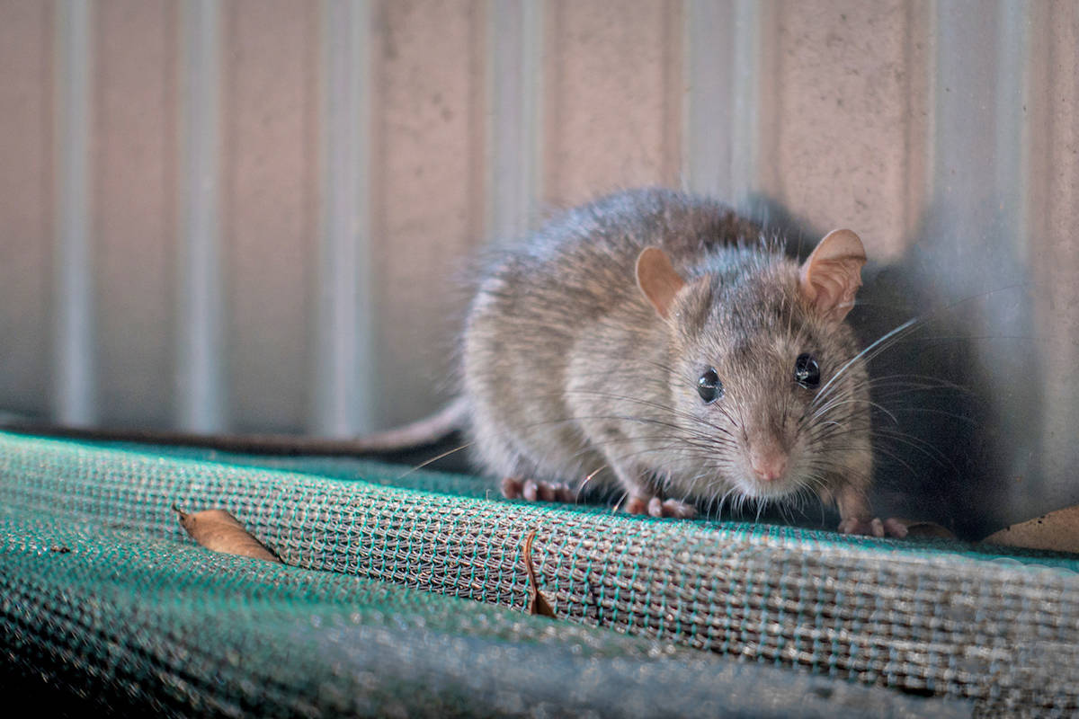 How Pest Control Is Different In 2020