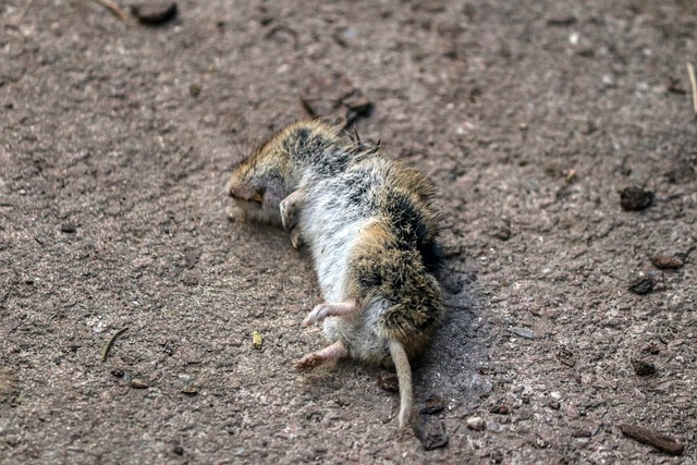 Information You Need To Know To Get Rid Of Pests