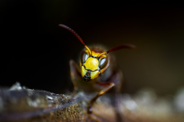 Check Out Some Of These Smart Pest Control Tips