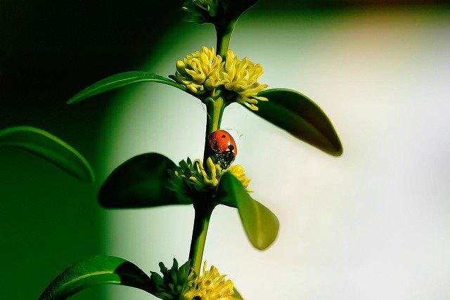 Extermiante! Pest Control Tips You Can Do!